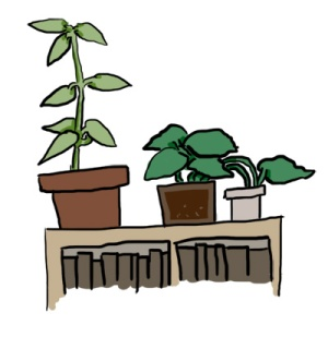 shelf plants