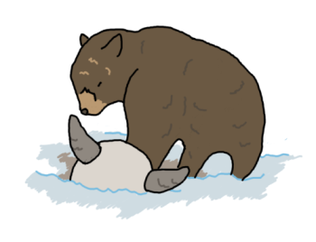 yellowstone_bear