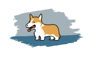 office corgi